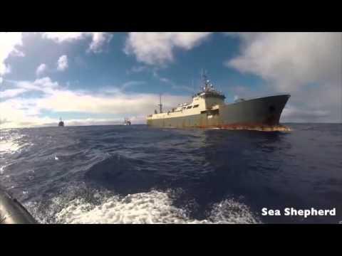 Ocean Warriors: Sea Shepherd's Latest Campaign