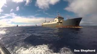 Ocean Warriors: Sea Shepherd