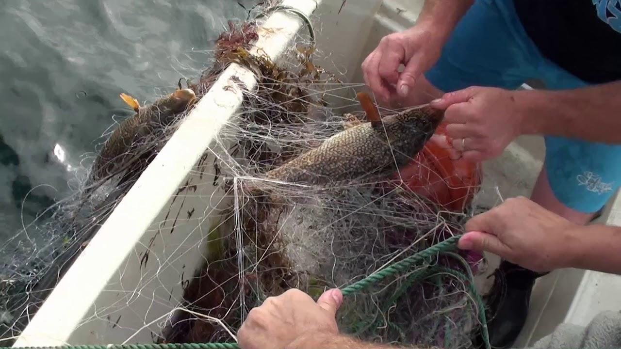 Filet De Peche Déco Pas Cher filet de pêche : comparatif des meilleurs en 2020 avec avis