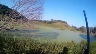 видео полювання на качку