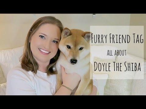 Furry Friend Tag | Doyle The Shiba ^..^