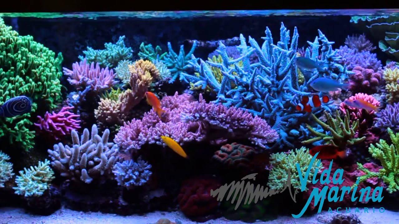 Vida marina acuarios en puerto vallarta peceras peces for Peces de agua dulce para peceras