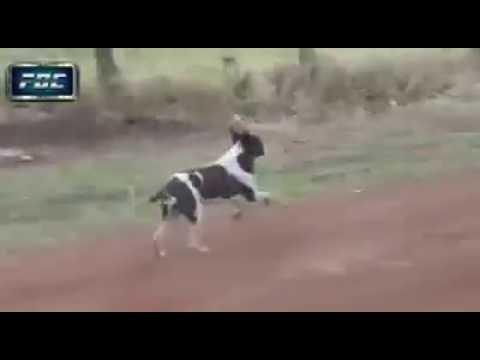 Perro se salva de ser atropellado por auto de rally