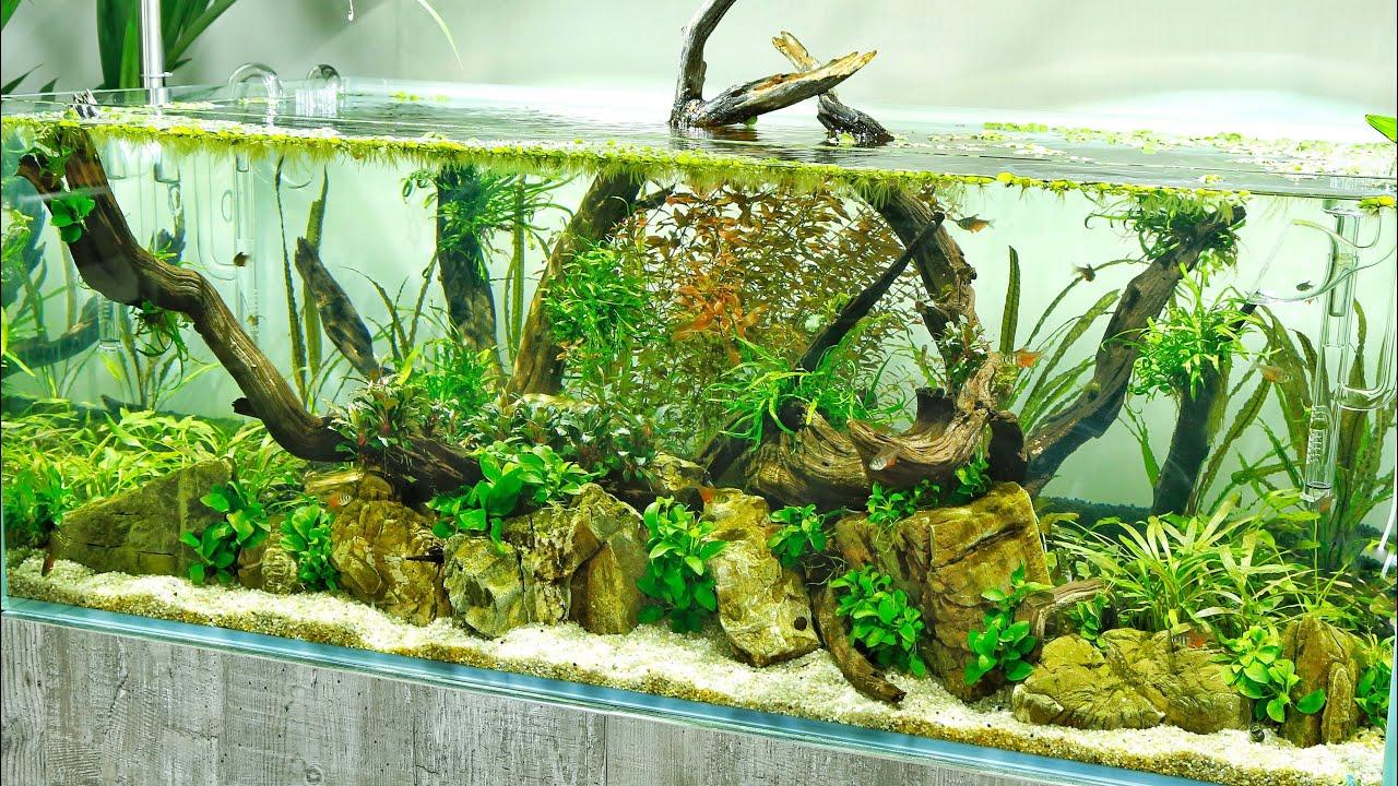 Beautiful Aquascape - Aquascaper 1200 Planted Aquarium at ...