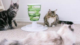 Q&A: Do Your Maine Coons Shed a Lot?
