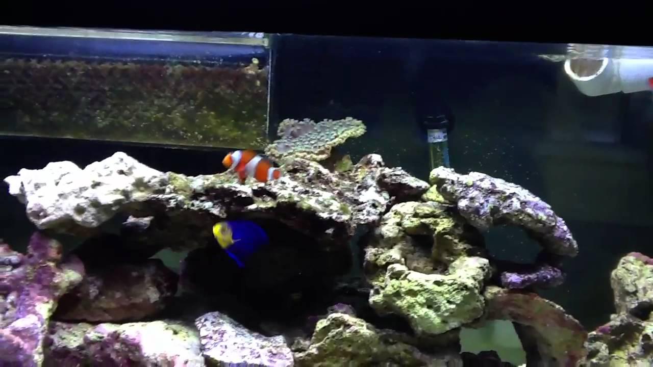 15 gallon nano tank with 10 gallon sump new clown fish for 15 gallon fish tank
