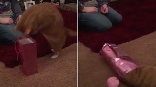 猫がこの小さな紙袋にダイブすると…どうなっちゃうと思う?(動画)