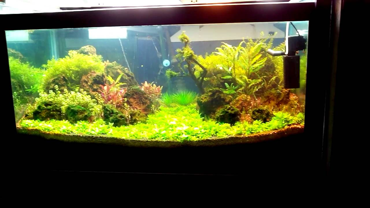 Fish for aquarium in bangalore - Omsree Aquarium Bangalore Karnataka India