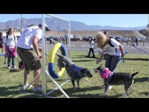 Animal Humane 2011 Doggie Dash & Dawdle
