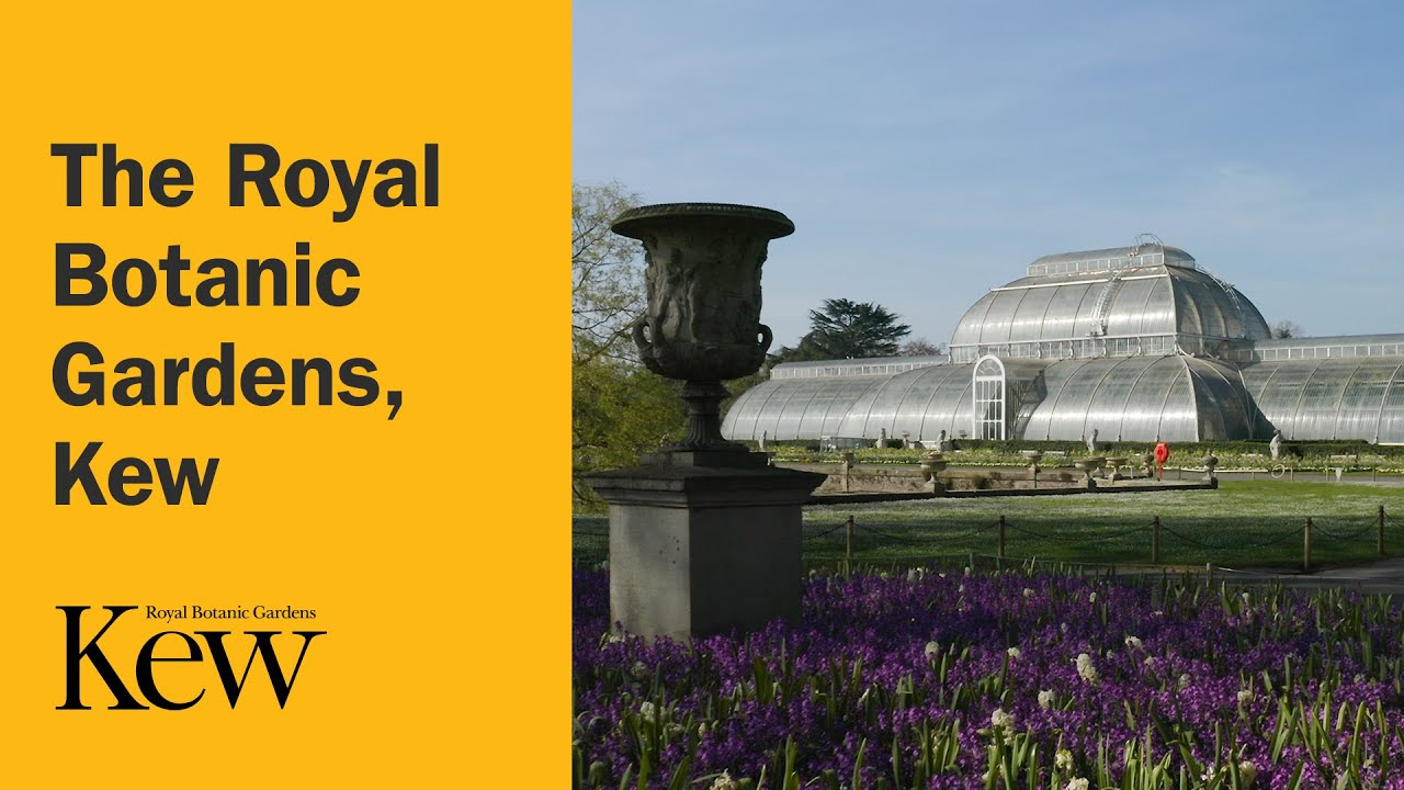 Download The Royal Botanic Gardens, Kew