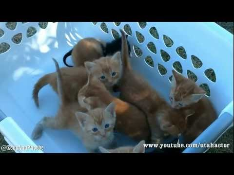 Thumbnail for Cat Video Basket of Meowing Kittens