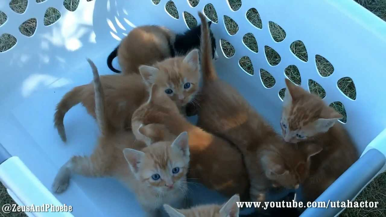 Basket of Meowing Kittens - YouTube
