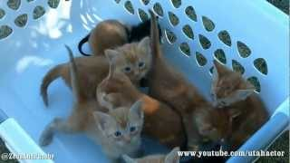 Basket of Meowing Kittens