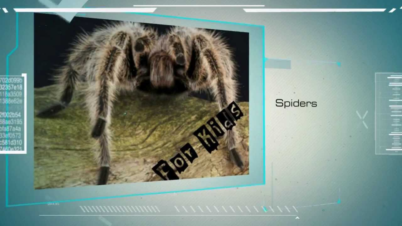 jumping spiders spiders for kids amazing animal books for