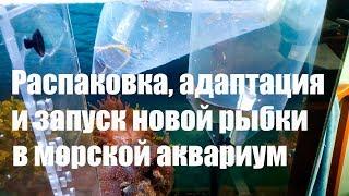 Распаковка, адаптация и запуск новой рыбы в морской аквариум