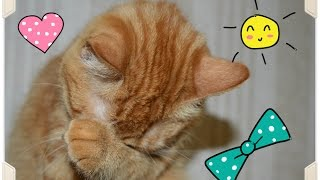 Смешные коты ♥ Женя помогает убирать ♥ Смешные животные ♥ Funny cats ♥ حيوانات مضحكة