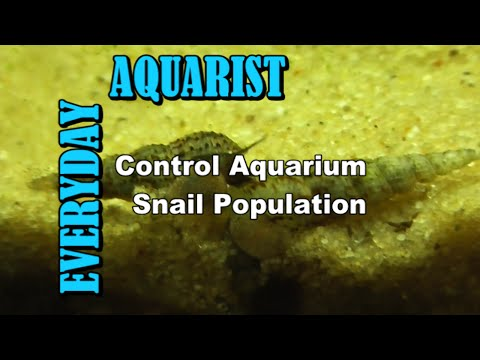 How To Control And Kill Aquarium Snail Population