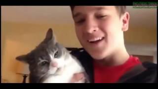 Смешные видео про кошек и собак