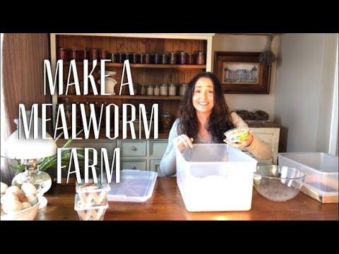 Make a Mealworm Farm