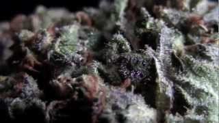 BC God Bud Strain Review #CRTV420