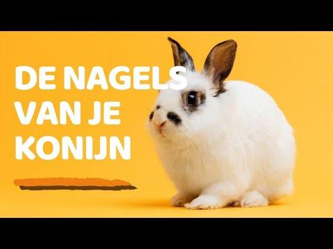 De nagels van het konijn