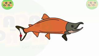 How to draw and paint FISH PINK SALMON   STEP BY STEP   TADA-DADA Art Club