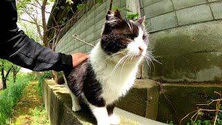 ハチワレ猫のお散歩について行ったら、そのまま住処へと帰っていった