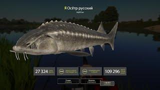 Русская рыбалка 4 ахтуба осетр