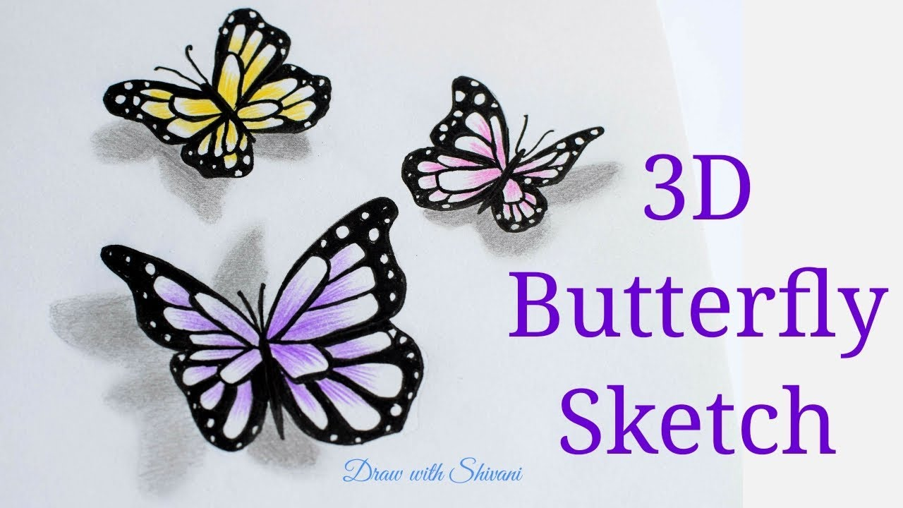 How to draw 3d butterfly sketch using pencil colors butterfly drawing