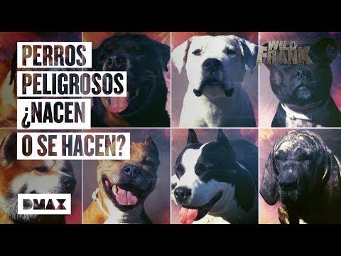 Wild Frank investiga la situacin de los perros potencialmente peligrosos en Espaa