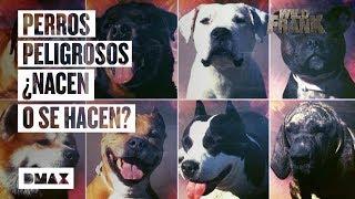 Wild Frank investiga la situación de los perros potencialmente peligrosos en España