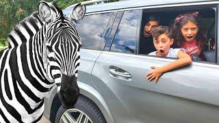 Zoo drive thru with HZHtube kids fun vlogs family fun