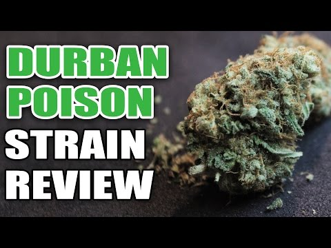 Durban Poison Strain Review - Cannabis Lifestyle TV