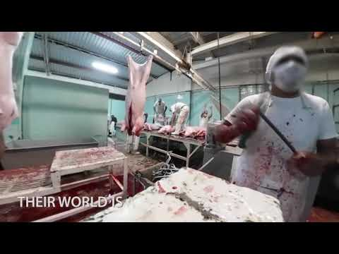 Animals Tortured to Death at Mexico's Slaughterhouses