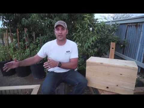 Swarm to Topbar Hive: Catching Bees part 3