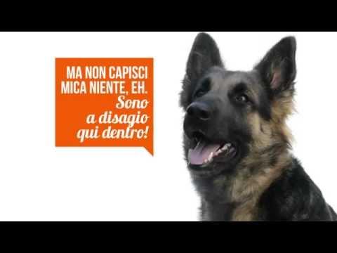 Simone Dalla Valle, Come parla il tuo cane
