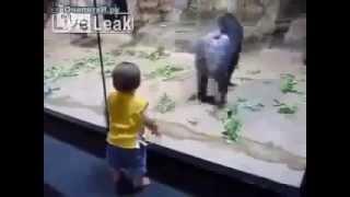 Малыш и обезьяны смешные приколы с животными