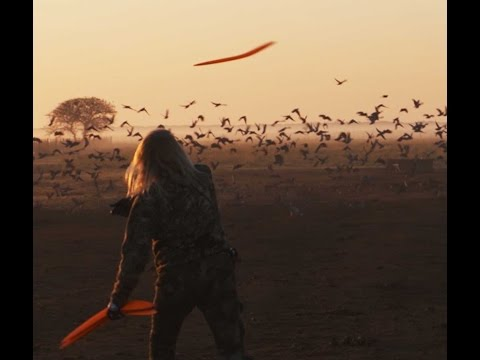 Is Killing Flying Birds with a Boomerang Possible.  WATCH and SEE!