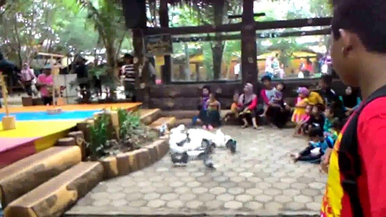 Download 90 Foto Gambar Burung Merpati Terindah HD Paling Bagus Free