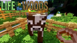 🔨 Minecraft 08 | Voll KUHL Kühe fangen | Gameplay thumbnail