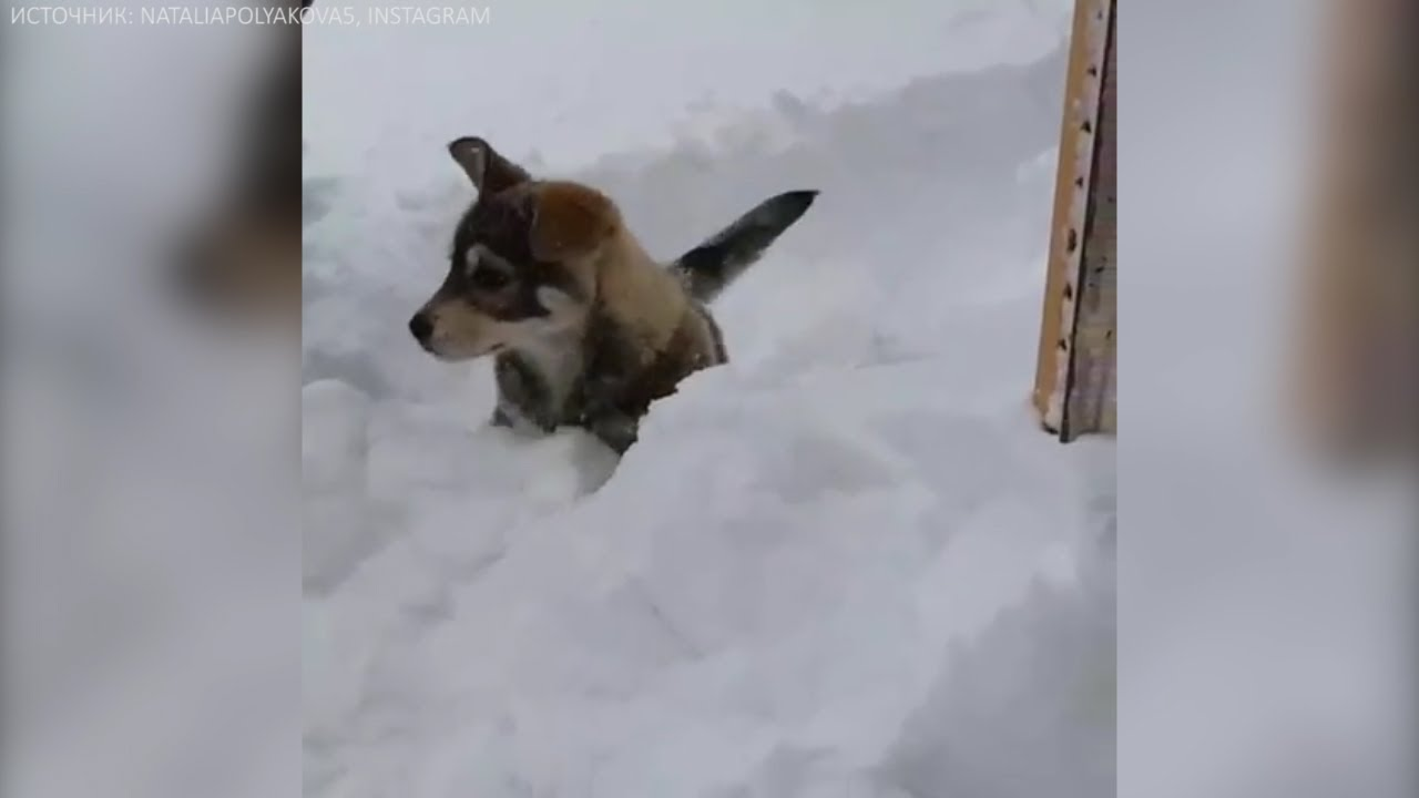 На Ямале выпал снег