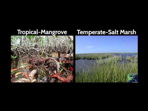 Combating coastal land loss, preserving resilient communities | Karen McKee | TEDxLSU