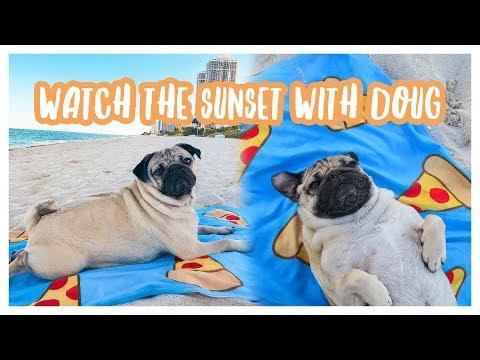 Watch The Sunset With Doug The Pug