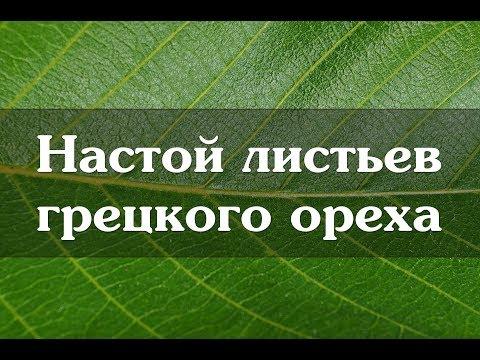 Настой листьев грецкого ореха