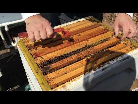 Polystyrene Hive Inspection