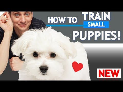 How To Train Small Puppies!