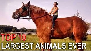 Top 10 Biggest Animals Ever of their Kind