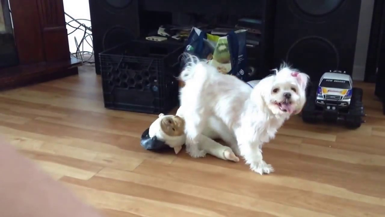 Animal Porn Wife Has Sex With Dog sex porn for dog