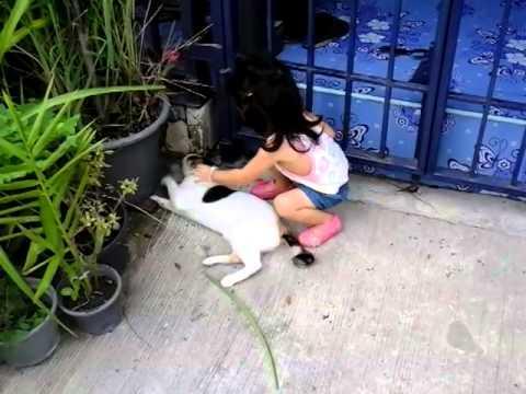 หนูจับแมวสามสี