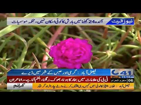 Hot, Humid weather in Faisalabad